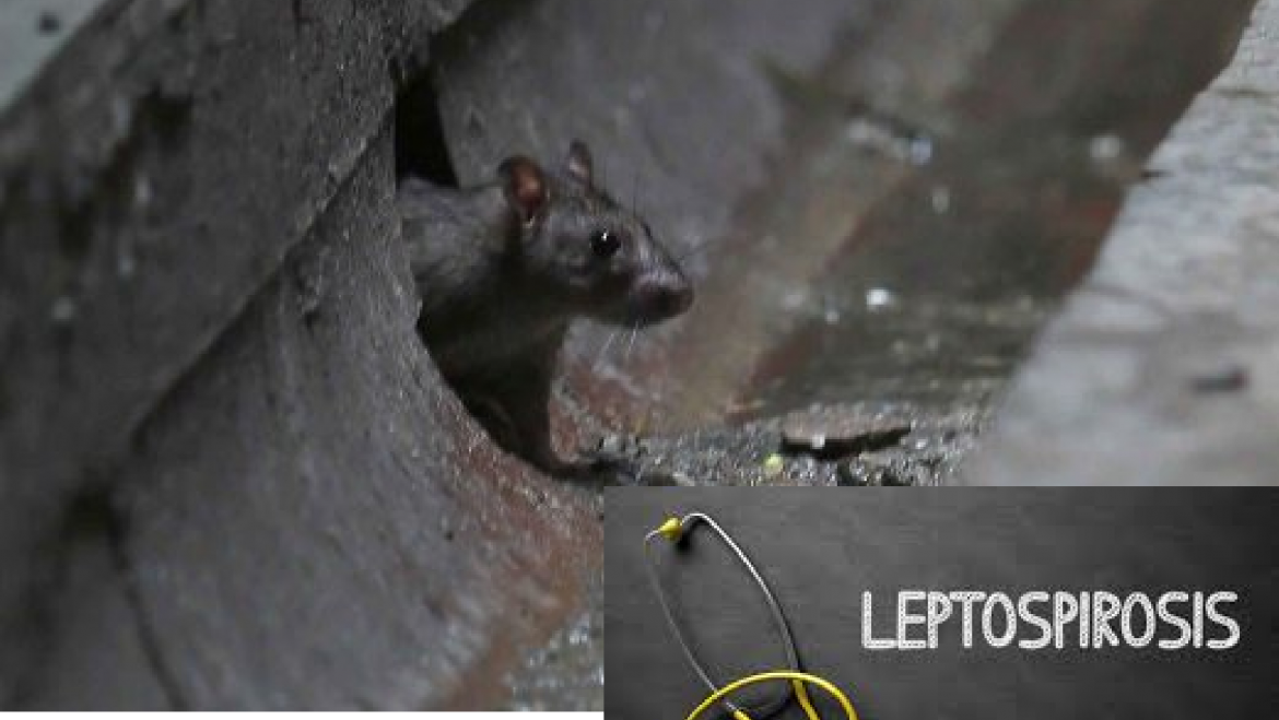 Floods and Leptospirosis